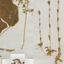 Images of Specimens collected by Charles Darwin on the voyage of the Beagle 1831-1836